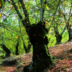 ramon-leon-fotografo-libro-huelva-serrania-luz